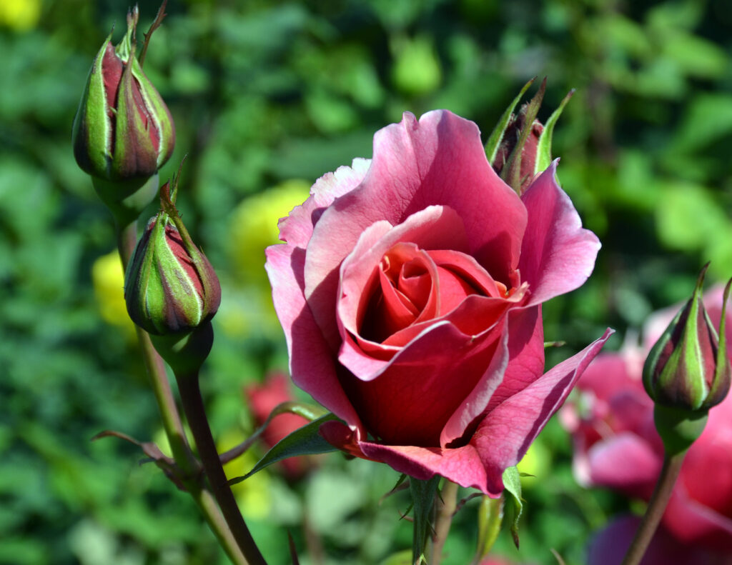 rose bud senior personals Name email save my name, email, and website in this browser for the next time i comment upload attachment (allowed file types: jpg, gif, png, mp4, m4v, mov, wmv.