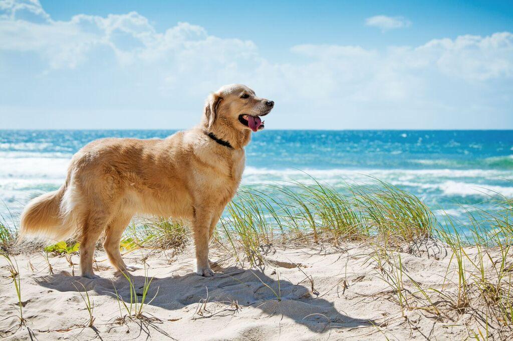 dog.beach