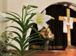 Lily Cross Easter
