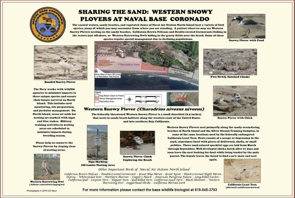western snowy plover nbc