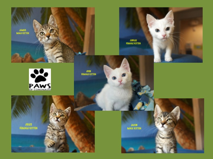 spaying and neutering cats for free