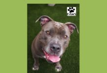 skye a dog for adoption is the paws of coronado pet of the week