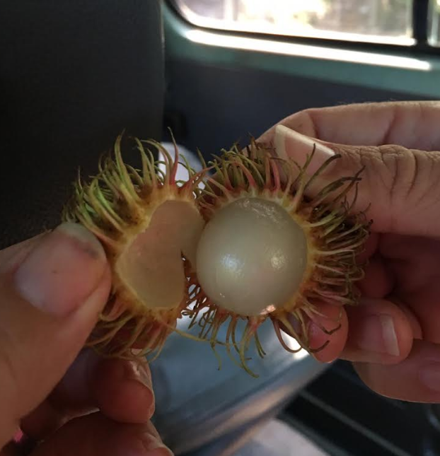 We did stop at a few lychee fruit stands - yummy!