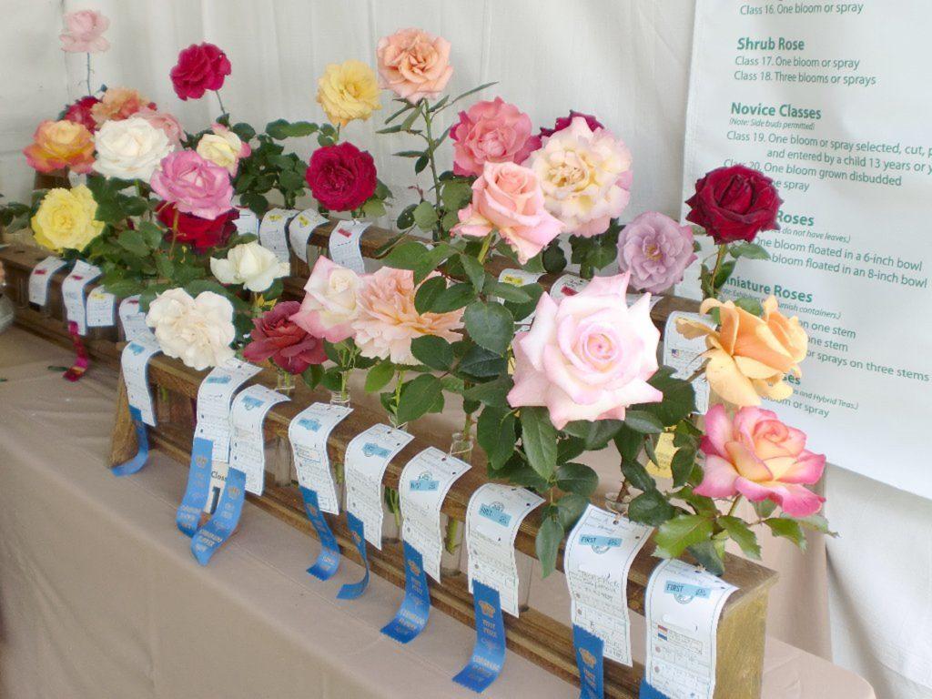 roses Coronado Flower Show