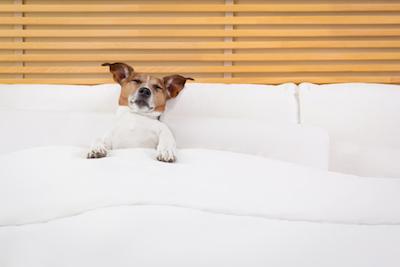 Coronado Inn dog friendly