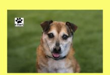 bandit a dog for adoption is the paws of coronado pet of the week