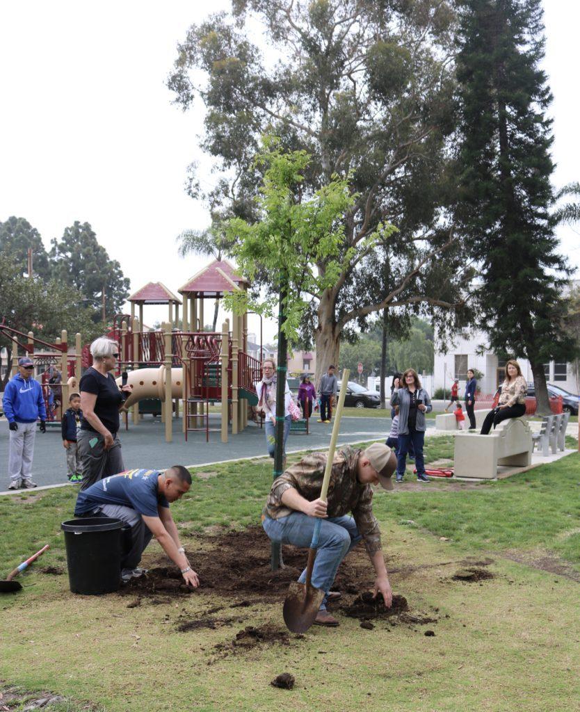 Arbor Day, Coronado