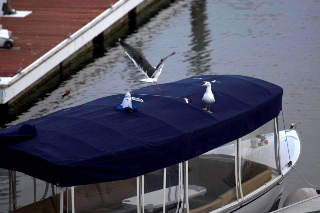 seagulls on top of boat