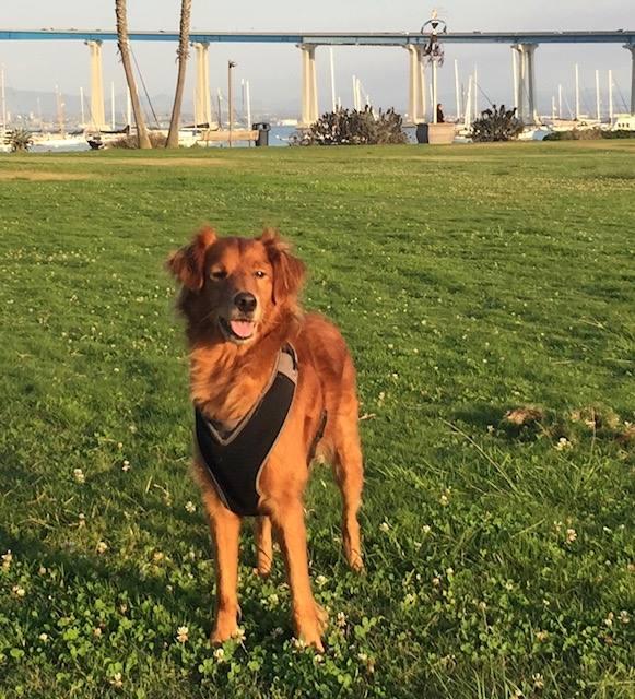 A Push for Community Dog Parks Sparks Controversy | Coronado