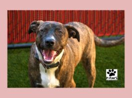 11.15.17 paws of coronado pet of the week camell