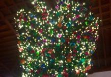 Hotel Del 39 S Upside Down Tree Coronado Times