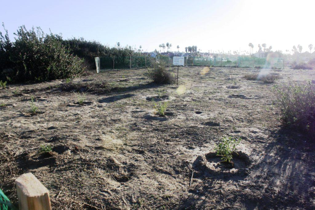 Grand Caribe Shoreline Park's New Plants