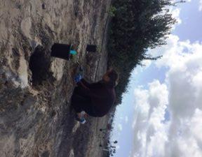Grand Caribe Shoreline Park Volunteer
