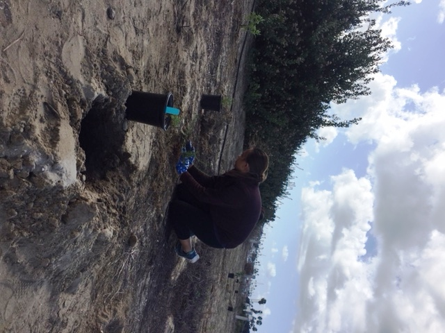 cays resident girl scouts replant grand caribe shoreline
