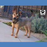 kiley is this weeks pet of the week at paws of coronado