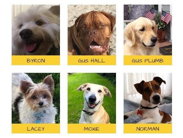 Coronado Has A New Canine Mayor