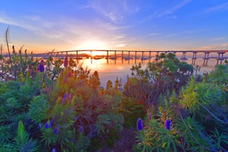 Sunrise Bridge &Flowers, Brian Lippe