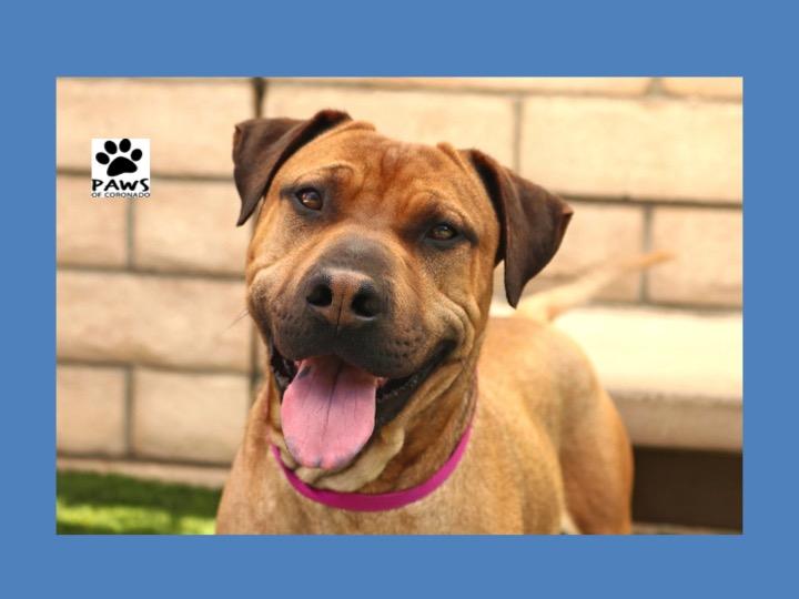 mombo is the paws of coronado pet of the week 08.08.18