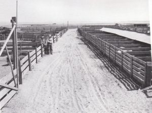 Cays Hog Ranch. Photo City of Coronado