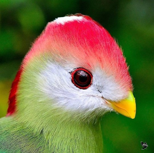 Rare, Ravishing And Remarkable Birds Of The World